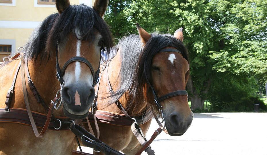 Två hästar utanför Edsbergs slott
