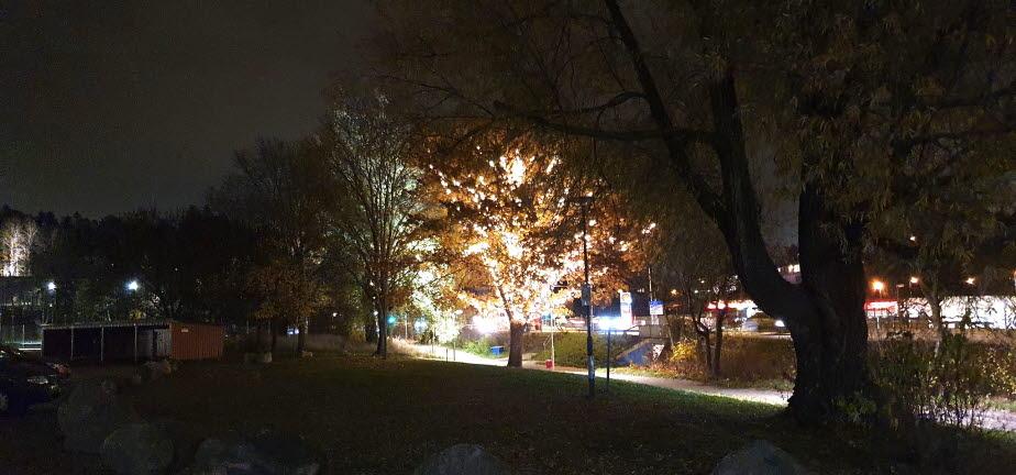 Träd upplyst av många lampor skapar trivsel.