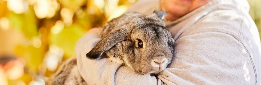 kille med kanin